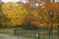 green yellow and brown (malinowy) Tags: park leuven 50mm nikon