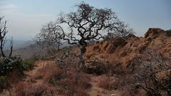 Zuid-afrika 2011  - 059 (Toerisme & Marketing) Tags: wes lesotho maseru zuidafrika stdm