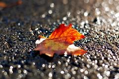 after the rain (Daniela Klara R. (gone)) Tags: street autumn orange glitter lens 50mm grey leaf glamour bokeh asphalt