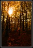Sometimes I see too much red... (collinro2) Tags: autumn red sun fall forest romania rays nikond90 flickraward diamondclassphotographer flickrdiamond