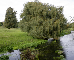 TRANQUIL RIVER STOAR (Adam Swaine) Tags: county uk flowers trees england green english water beautiful rural canon landscape countryside kent flora britain east 1740mm waterside counties naturelovers 2011 englishrivers thisphotorocks adamswaine northdownskent mostbeautifulpicturesmbppictures wwwadamswainecouk kentishlandscapes riverstoar
