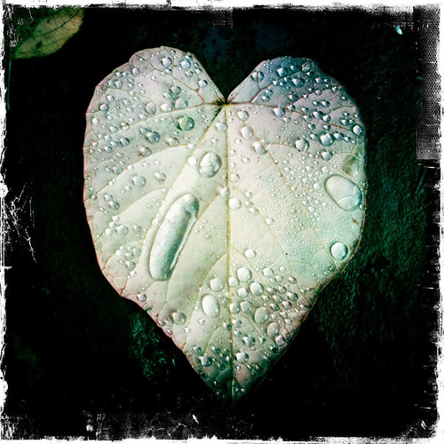 Heart-shaped leaf