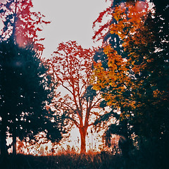 Calico Season (Daniel Polidori) Tags: fall silhouette oregon xpro crossprocessed lubitel166 russiancameras