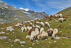 """Draw me a sheep"" Image was taken  in  Switzerland ;  (Near Saas Fee ) Canton of Valais above Stausee Matmark , August 10,2011.12:27:25 .     no.94. (Izakigur) Tags: summer italy mountains alps topf25 alpes landscape liberty schweiz switzerland nikon europa europe flickr italia suisse suiza swiss feel 1755mmf28g monterosa monte d200 alpen helvetia nikkor svizzera wallis ronaldo lepetitprince ch valais dieschweiz musictomyeyes  sussa 1755 saasfee suizo topf400  myswitzerland lasuisse nikond200 thegalaxy nikkor1755f28 nikkor1755 montemoro 200faves mattmark  nikon1755f28g  400faves  montemoropass izakigur cantonduvalais  suisia imagesforthelittleprince laventuresuisse bestcapturesaoi elitegalleryaoi mygearandme izakiguralps izakigur2011 nikkor17551755"