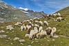 """Draw me a sheep"" Image was taken  in  Switzerland ;  (Near Saas Fee ) Canton of Valais above Stausee Matmark , August 10,2011.12:27:25 .     no.94. (Izakigur) Tags: summer italy mountains alps topf25 alpes landscape liberty schweiz switzerland nikon europa europe flickr italia suisse suiza swiss feel 1755mmf28g monterosa monte d200 alpen helvetia nikkor svizzera wallis ronaldo lepetitprince ch valais dieschweiz musictomyeyes 瑞士 suïssa 1755 saasfee suizo topf400 스위스 myswitzerland lasuisse nikond200 thegalaxy nikkor1755f28 nikkor1755 montemoro 200faves mattmark سويسرا nikon1755f28g שווייץ 400faves 阿尔卑斯山 montemoropass izakigur cantonduvalais 명사 suisia imagesforthelittleprince laventuresuisse bestcapturesaoi elitegalleryaoi mygearandme izakiguralps izakigur2011 nikkor17551755"