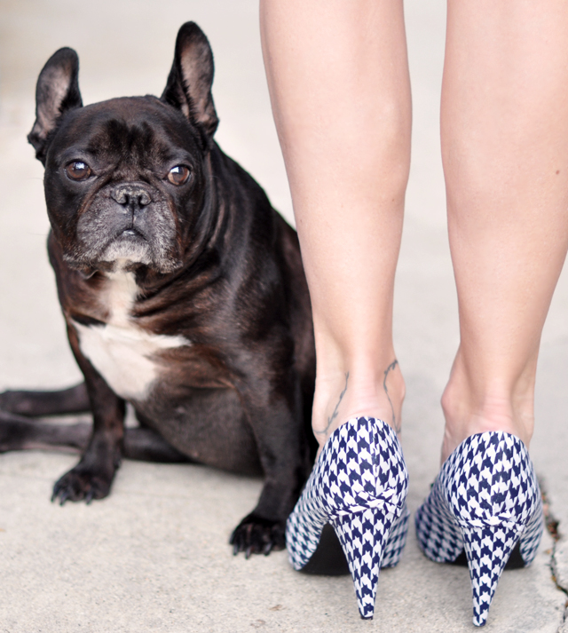 french bulldog-houndstooth shoes-heels-legs