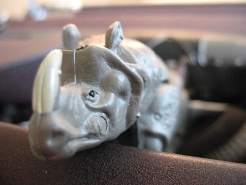 Peeved Rhino