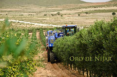 Cosechadora (Grupo Caparrós) Tags: españa sol de cabo natural oil grupo oliva almeria parte oro aceituna pérez fernán portocarrero caparros níjar gatanijar