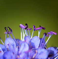 Purple dancers (Arnfinn Lie, Norway) Tags: macro nature closeup forest norge purple details wildflower tamron90mm wow1 arnfinn forestplant sonyalpha350