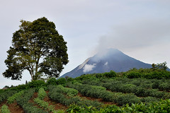 Berastagi - Sinabung Volcano (Drriss & Marrionn) Tags: travel nature sumatra indonesia landscape volcano rainforest southeastasia jungle tropics nationalgeographic berastagi worldtrekker blinkagain bestofblinkwinners sinabungvolcano flickrstruereflection1