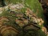 Camadas/layers (Ricardo Venerando) Tags: park macro green art nature brasil garden natureza olympus botânico explore jardim jardimbotanico discovery soe naturesfinest botânica nationalgeografic platinumphoto diamondclassphotographer ysplix goldstaraward fotocultura