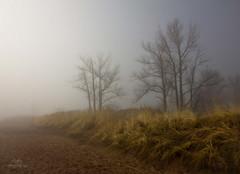 Light of the Equinox (Boreal Bird) Tags: light fog magic equinox