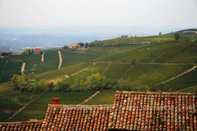 immagine foto vista sulle langhe piemonte italia