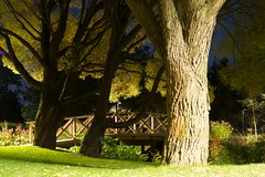 Dark Arboretum (jptoivon) Tags: bridge autumn tree night tampere syksy silta 2011 ruska salava lehtipuu yo kulttuurimaisema
