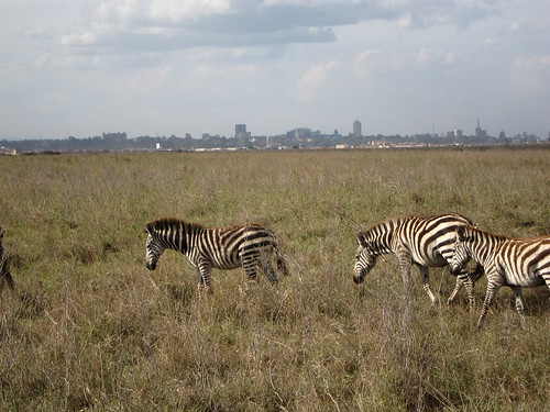 Zebras and Skyline