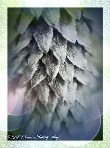 Grunge Cone by bichonphoto