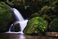 forest shower (Dennis_F) Tags: black green water zeiss forest flow woods stream long exposure wasserfall sony falls bach grn fullframe dslr schwarzwald 135mm 13518 a850 sonyalpha sonydslr vollformat gertelbach cz135 zeiss135 wasserflle dslra850 sonya850 sonyalpha850 alpha850 sony135 sonycz135
