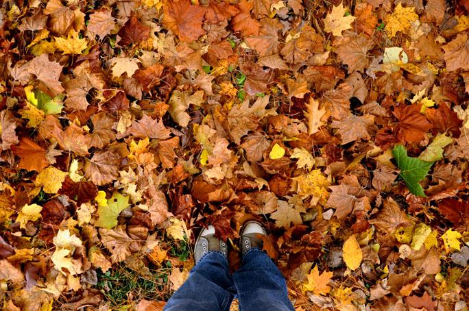fall walk13