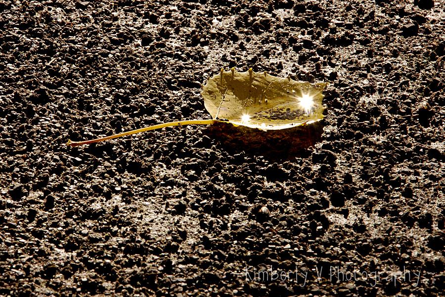 Leaf sunburst