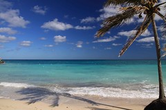 Cayo Coco, Palmtree at the beach - Explore (blauepics) Tags: travel blue sea seascape beach water clouds strand america palms landscape island mar reisen meer wasser republic country cuba nation central wolken playa republik insel communist explore coco latin land caribbean blau cuban amerika landschaft palmera isla americas cayo kuba the palmen karibik lateinamerika mittelamerika kubanische