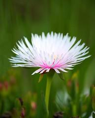 Perfect in pink (Deb Jones1) Tags: flowers flower macro nature beauty garden outdoors 1 jones flora explore blooms deb flickrduel pinkcanon debjones1