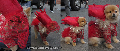 Tompkins Park Halloween Dog Parade_Pomeranian in Lady Gaga costume