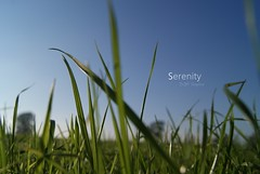 Serenity. (BQM 'Graphies) Tags: vert printemps herbe serenit bqmgraphies