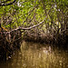 Mangroves-3