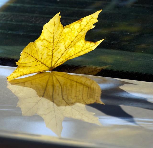 Leaf Iteration