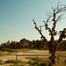 Cappadocia tree