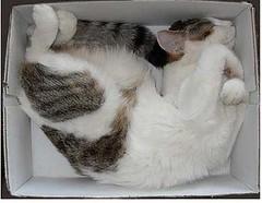 gatti che dormono in una scatola