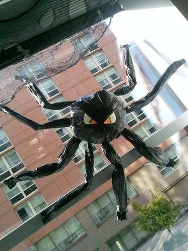 Spider Halloween 2011