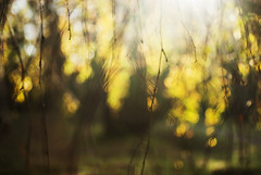 (despite our differences) Tags: sunlight green fall nature yellow focus bokeh arboretum twigs losser nikond200