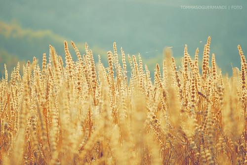Alla ricerca della felicità del vento