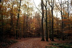 Roter Teppich (anirbas_84) Tags: autumn trees tree fall herbst natur wald bltter bume baum ammerland wildenloh