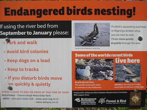 Endangered Birds Nesting!
