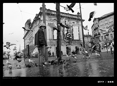 J77D decisif instant (Emmanuel DEPARIS) Tags: life street city bird theatre pigeon scene porto ville emmanuel vie deparis