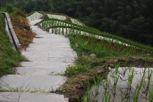 Path through the paddy fields
