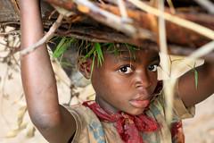 Child Carrying Sticks (AdamCohn) Tags: africa child labor uganda agriculture carrying childlabor adamcohn wwwadamcohncom