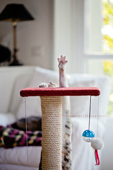 I am the champion! (| Les Hirondelles |) Tags: door winter light italy pet white home window lamp animal cat canon ball toy toys nose foot paw italian chair friend kitten afternoon bright interior sunday champion kitty balls naturallight li