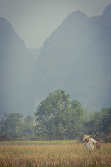 (joyrex) Tags: china mountains rice yangshuo farmer karst rijst chaolong karstmountains