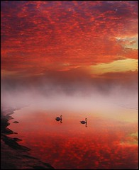 Floating on lava (adrians_art) Tags: sky cloud mist water birds fog reflections fire dawn bravo swans rivers