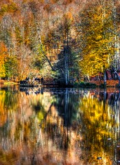 Yedigller, Bolu (Nejdet Duzen) Tags: trip travel autumn lake reflection tree nature turkey trkiye bolu aa gl yansma turkei sonbahar seyahat doa yedigller saariysqualitypictures mygearandme ringexcellence