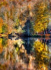 Yedigller, Bolu (Nejdet Duzen) Tags: trip travel autumn lake reflection tree nature turkey trkiye bolu aa gl yansma turkei sonbahar seyahat doa yedigller saariysqualitypictures mygearandme ringexcellence