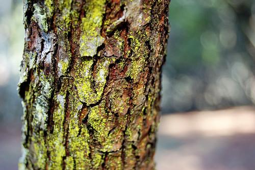 TreeBarkF