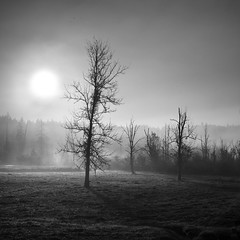 De la route (sparth) Tags: seattle leica morning trees blackandwhite bw sun tree fog 35mm square washington october empty voigtlander route redmond 12 35 m9 2011 sportsmanpark wasghintonstate voigtlander35mm12 delaroute leicam9