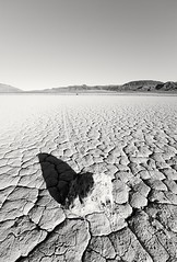 Lunar Rubble (twoeyes) Tags: bw usa mountains rock america landscape nevada dry playa explore lakebed deathvalley visuals cracks twoeyes explored sailingstones sailingstone bonnieclaireflat bonnieclaireflatplaya bonnieclaireplaya