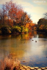 Grateful for you... (explored) (socalgal_64) Tags: thanksgiving family autumn trees friends fall love nature water leaves creek reflections river landscape geese colorful stream natural seasonal ducks appreciation explore thankful grateful fowl explored 100commentgroup howardsgallerysubmitted