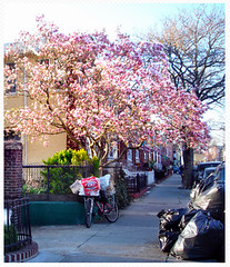 (Violette79) Tags: street new york ny brooklyn march spring hometown 2012 bensonhurst gravesend ilovenewyork allofit asapackage