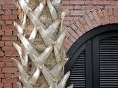 Palmetto Trunk, Charleston, SC (Spencer Means) Tags: palmetto trunk shutters black brick charleston sc southcarolina spencermeans hunkypunk brickwork flemishbond